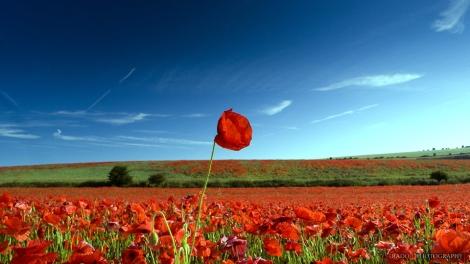 Flower on Sky